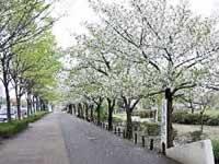 総合レクリエーション内新左近川親水公園